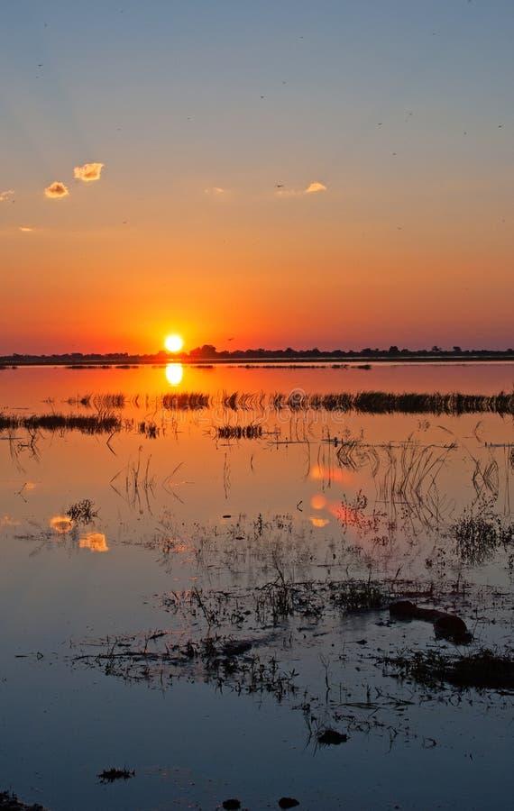 在宽CHOBE河的日落 库存图片