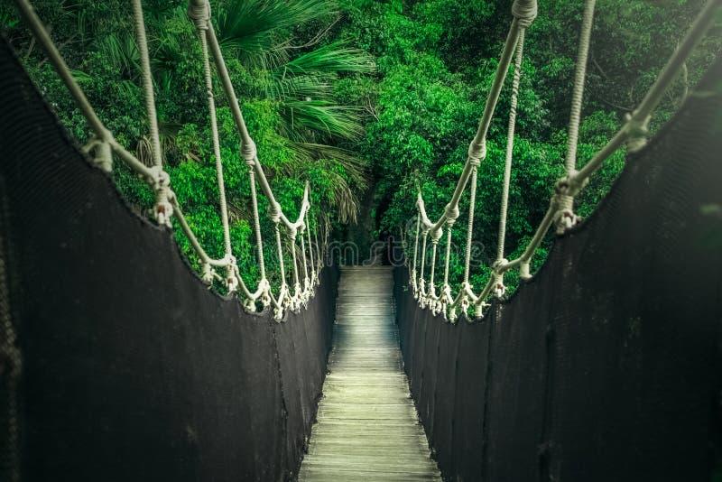 在密林峡谷的吊桥,绳索横穿 库存图片