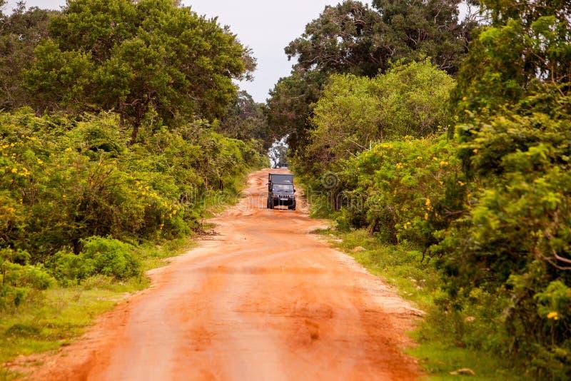 在密林的徒步旅行队吉普在斯里兰卡 库存照片