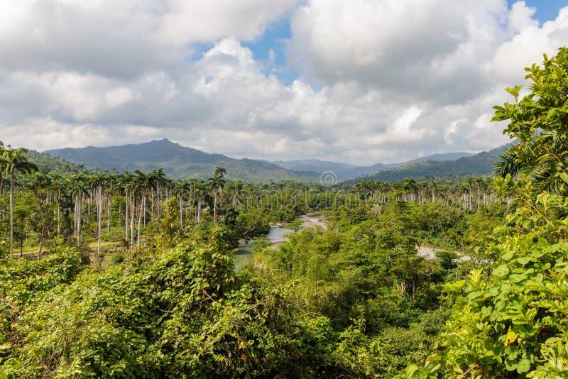 在密林的看法有在国家公园alejandro在baracoa古巴附近的de洪堡的棕榈的 库存图片