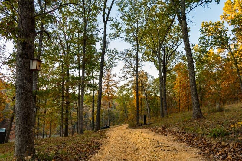 在密苏里的奥扎克族印第安人山的Forrest道路 免版税库存图片