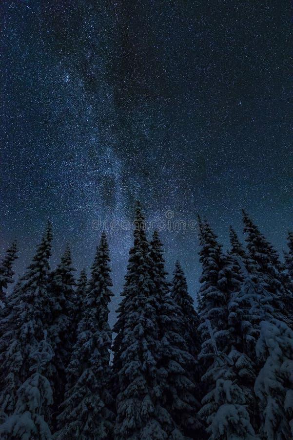 在寒冷冬天夜风景的银河 免版税库存图片