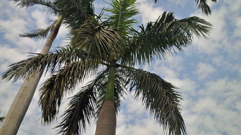 在寒冷的街道的棕榈树 免版税库存图片