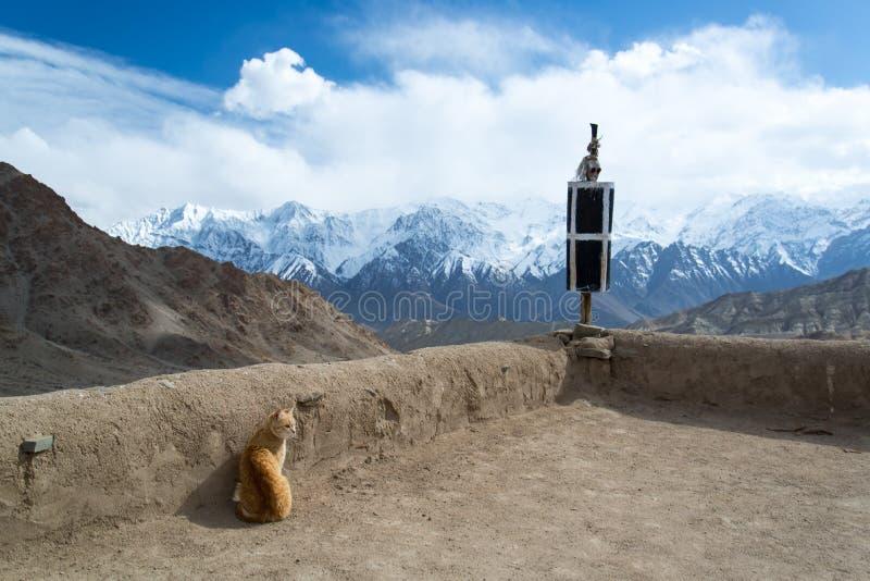 在寺庙的猫 免版税库存图片