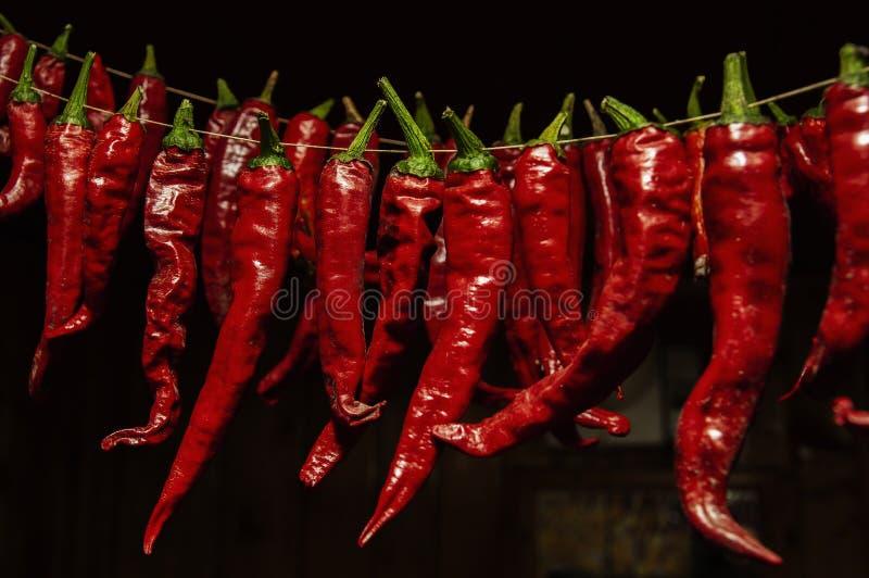 在导线的炽热冷颤的胡椒干燥 免版税图库摄影