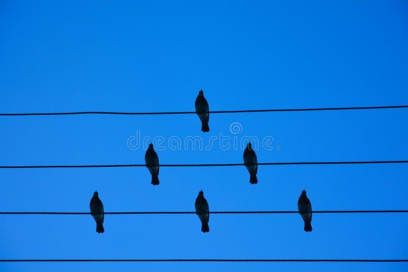 在导线的鸟 在一根导线的鸟在天空蔚蓝背景  队和配合的概念,不象所有的人和a 免版税库存照片