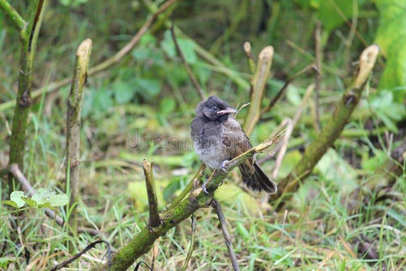 在小分支的微小的鸟 库存照片