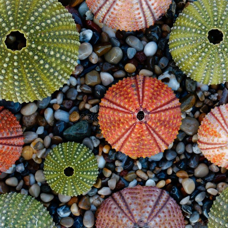 在小卵石的五颜六色的海顽童使顶视图靠岸 库存图片