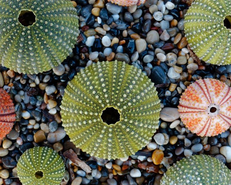 在小卵石的五颜六色的海顽童使顶视图靠岸 库存照片