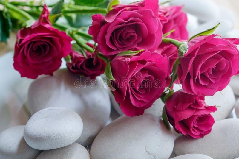 在小卵石的玫瑰 库存图片