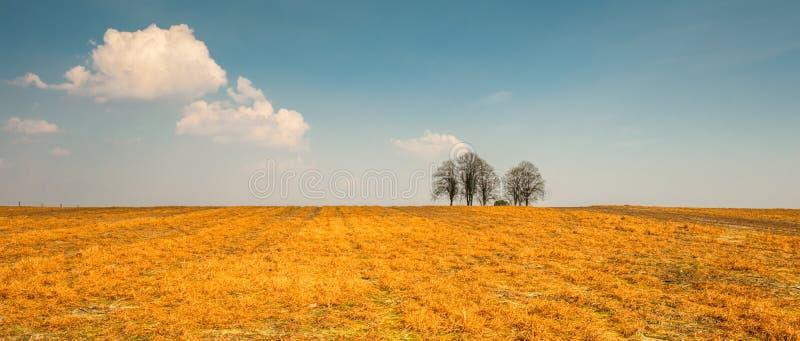 在小室火腿Twente,上艾瑟尔省附近的贫瘠荷兰风景在4月 库存图片