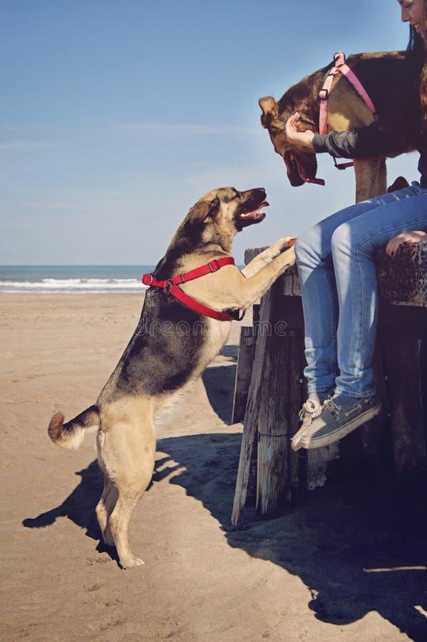 在小屋的狗 免版税库存图片