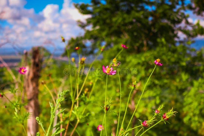 在小山上面的桃红色野花  免版税库存照片