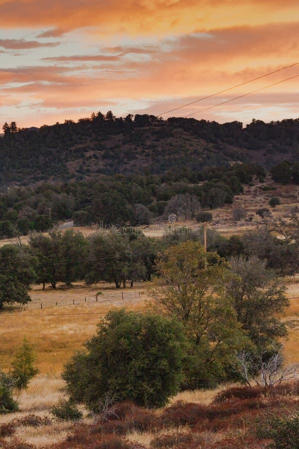 在小山在秋天,小橡树前景,日出天空橙色,黄色,金子,红色,垂直的forma树丛的清早阳光  免版税库存照片