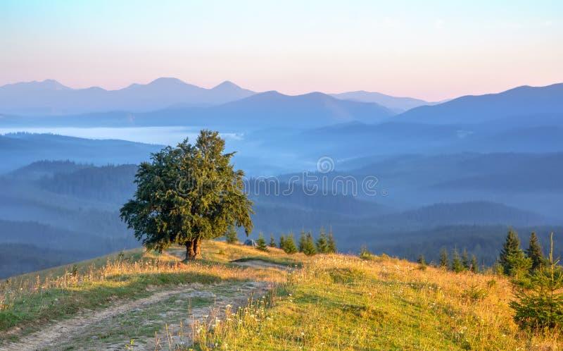 在小山的上面的偏僻的树以山剪影为背景的在清早,平安的风景 免版税库存照片