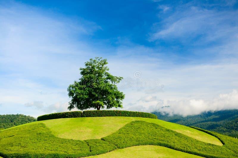 在小山的上面的偏僻的树 免版税库存照片