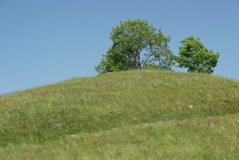 在小山的上面的树 免版税图库摄影