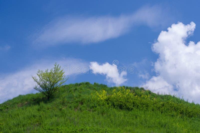 在小山的偏僻的树在天空蔚蓝下 库存图片