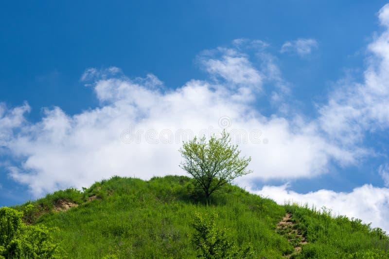 在小山的偏僻的树在天空蔚蓝下 免版税库存图片