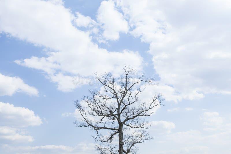 在小山的唯一树有蓝天背景 免版税库存照片