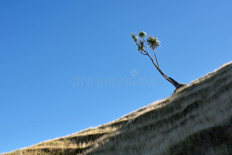 在小山的圆白菜树 库存照片