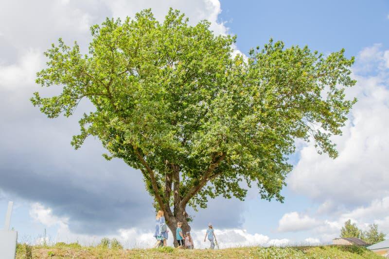 在小山的大传播的橡木 通过他是有孩子的一个家庭 免版税图库摄影