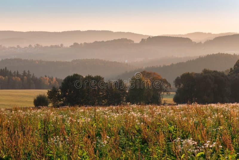 在小山的好的日落与在草甸的花,捷克风景 库存图片