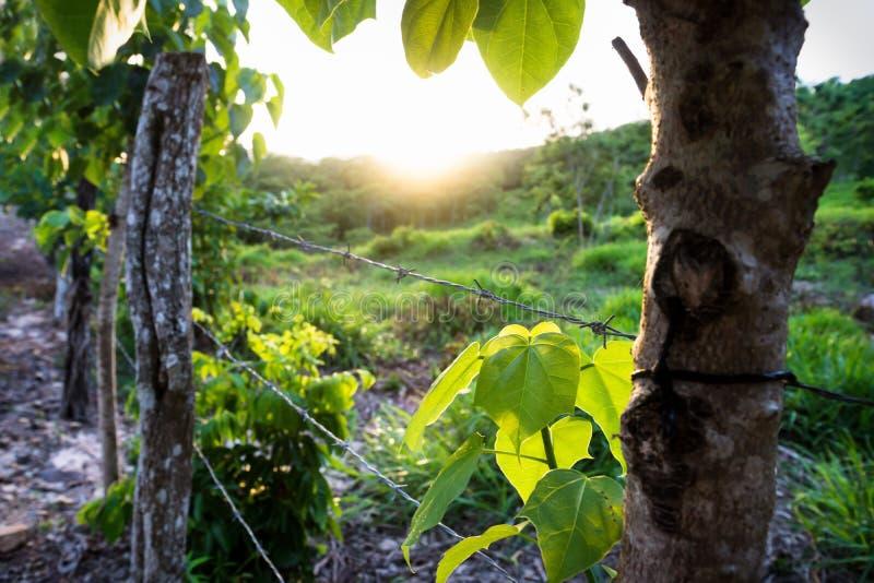 在小山的日落沿有barbwire的,El雷马特,危地马拉篱芭 免版税库存图片
