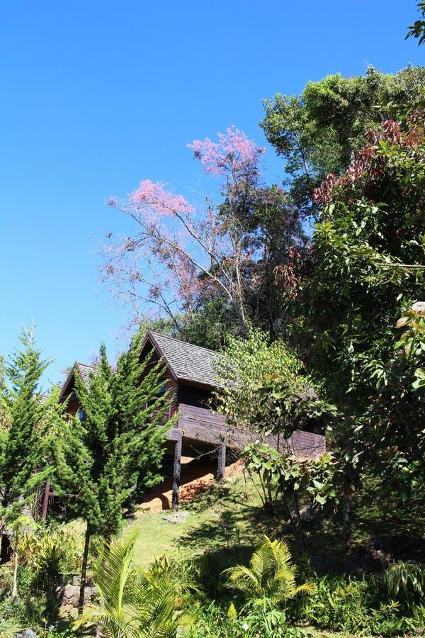 在小山的村庄与狂放的喜马拉雅山樱桃花 库存照片