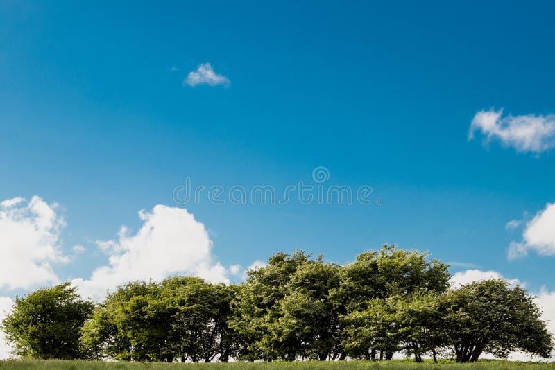 在云彩的树与天空蔚蓝和小山在一好日子.广联达电梯吊车梁怎么绘制图片
