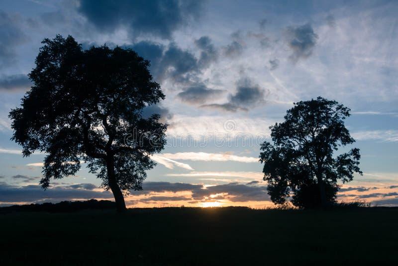在小山的树反对多云天空 免版税库存图片