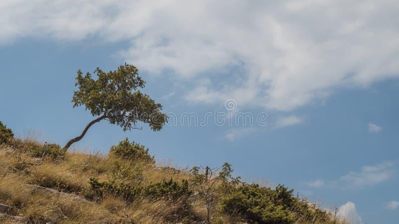 在小山的树反对蓝天 免版税库存图片