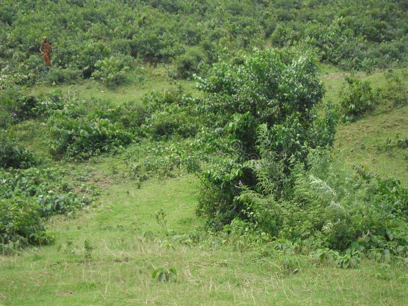 在小山的树 免版税库存图片