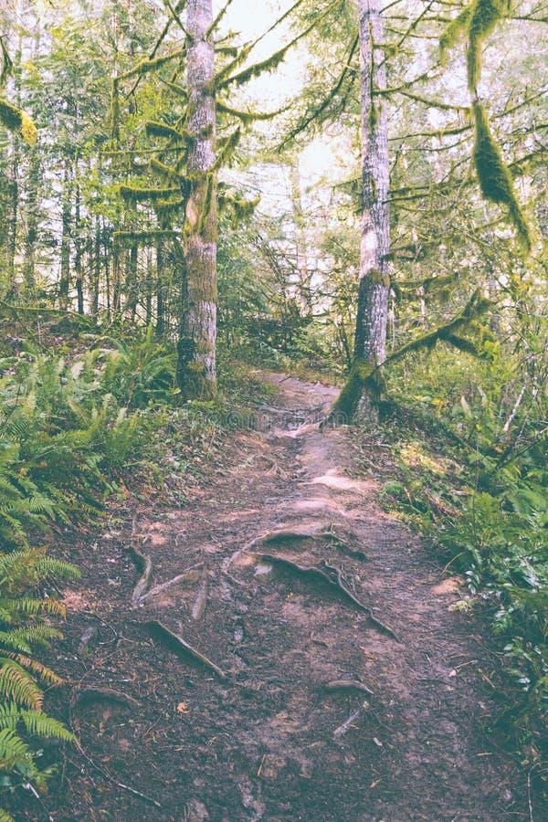 在小山的狭窄的道路在森林 免版税图库摄影