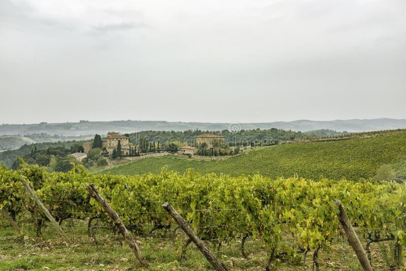 在小山的看法与葡萄园在美丽的托斯卡纳在意大利 库存图片