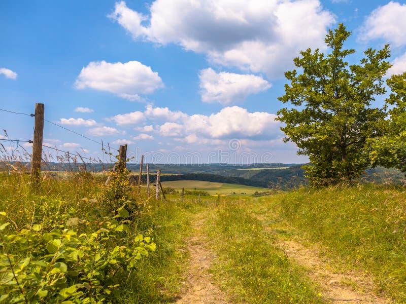 在小山的走的足迹在一个绿色夏天环境美化 免版税图库摄影