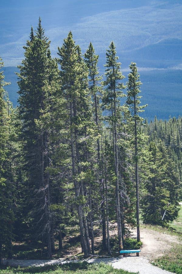 在小山的高杉树 免版税库存照片