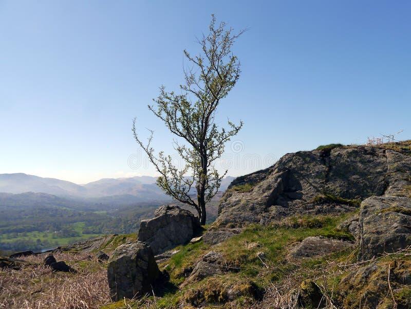 在小山集合的孤立树反对天空蔚蓝 免版税库存照片