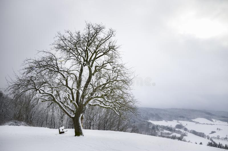 在小山顶的大多雪的树 免版税库存照片