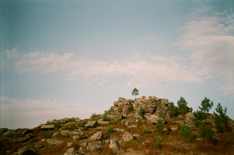 在小山顶部的一棵偏僻的树 库存照片