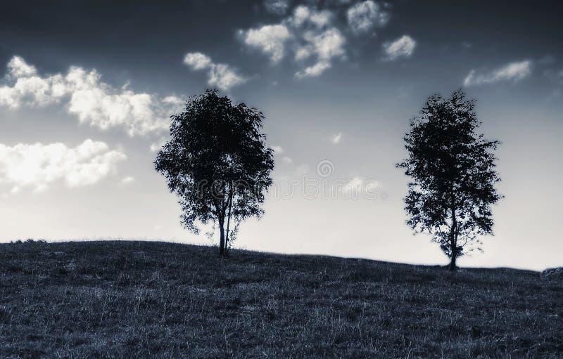 在小山顶部的两棵树 库存照片