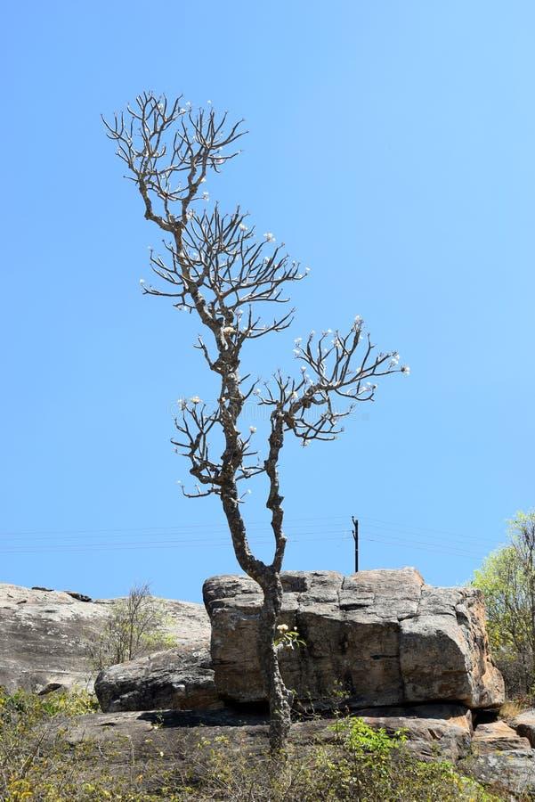 在小山顶部的唯一树 免版税库存照片