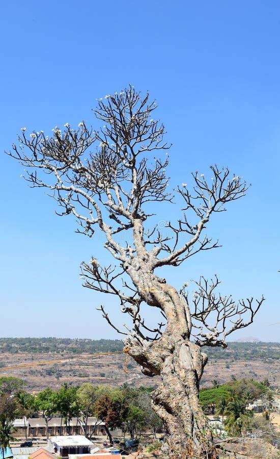 在小山顶部的树 库存照片
