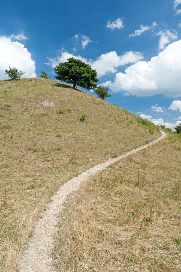 在小山顶部的树 库存图片