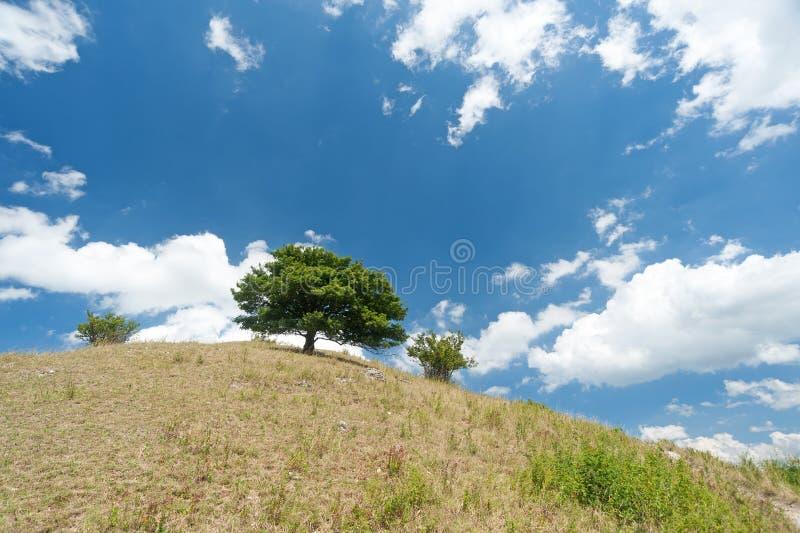 在小山顶部的树 图库摄影