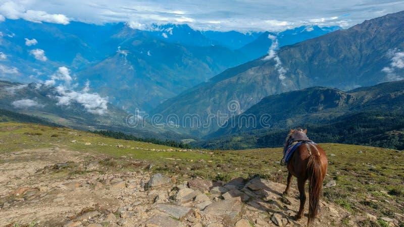 在小山顶部的马身分 库存图片