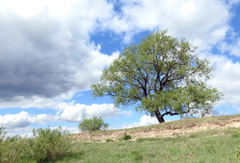 在小山,立陶宛的美丽的树 免版税库存图片