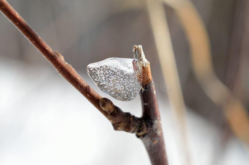 在小枝杈的美好的冰形状在冬天阳光宏指令 库存照片
