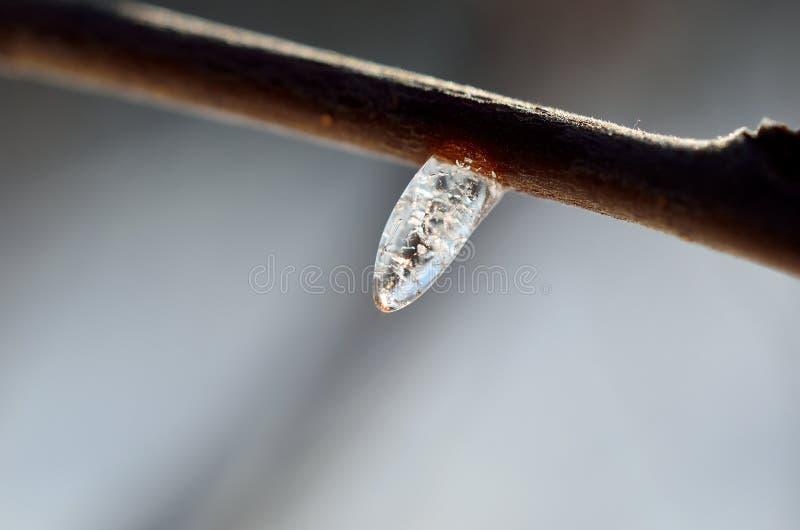 在小枝杈的美好的冰形状在冬天阳光宏指令 免版税库存图片