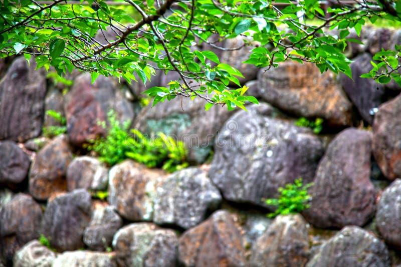 在小河旁边的岩石 免版税库存照片